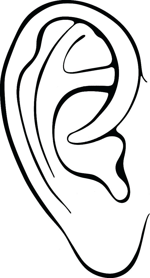 600x1109 human ear drawing at free for personal use human human body
