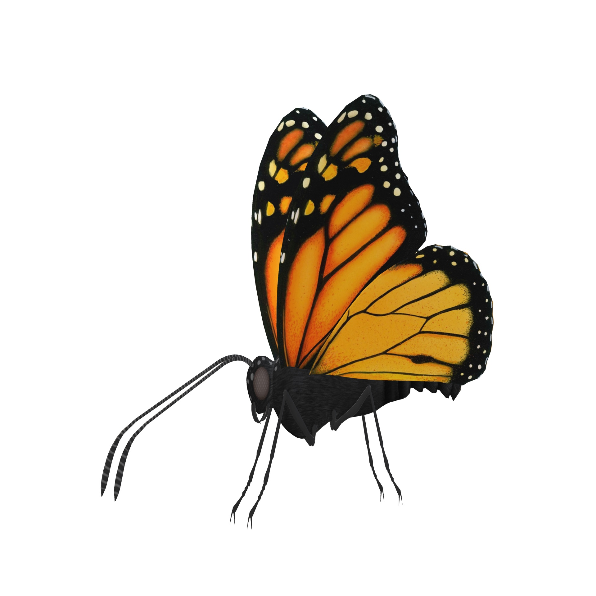 1920x1920 Butterfly Drawing