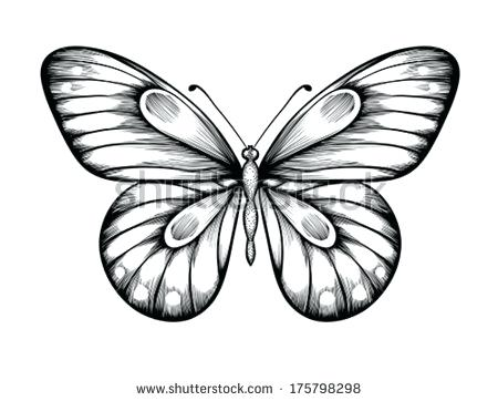 450x362 Drawings Butterflies Uploaded Years Ago Butterfly Drawings