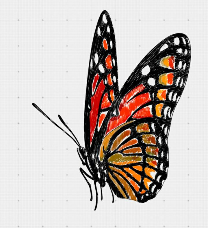720x792 How To Draw A Butterfly In On Paper Step