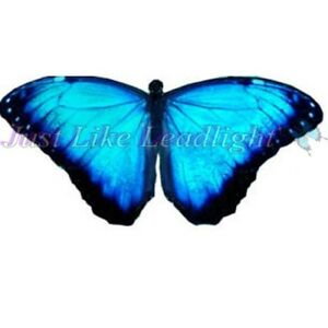 300x300 Transparent Butterfly Cut