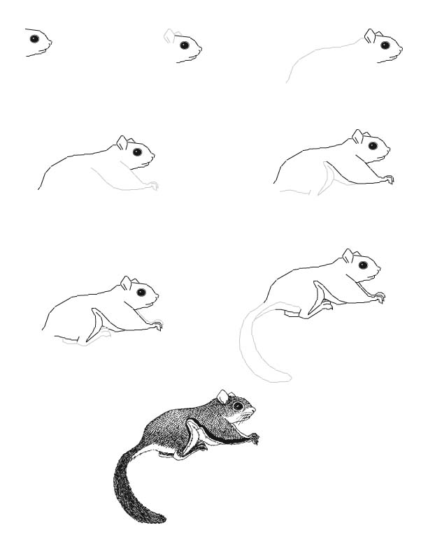 612x792 Squirrel Drawing Grade For Free Download