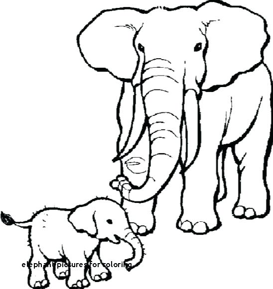 548x581 Elephant Picture For Drawing How To Draw An Elephant For Kids