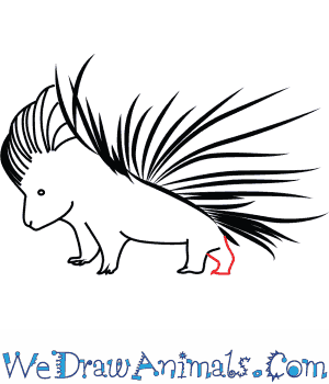 300x350 How To Draw An African Porcupine