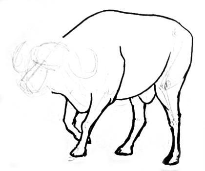 420x350 How To Draw A Buffalo