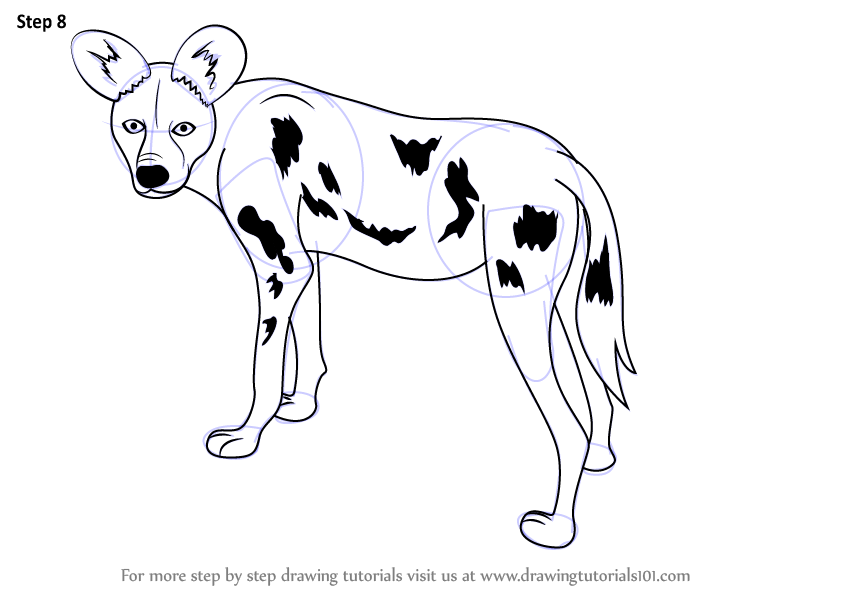 844x596 Learn How To Draw A African Wild Dog