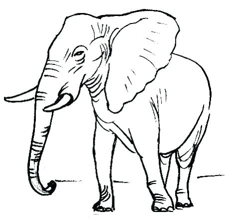 451x440 Elephant Picture Drawing