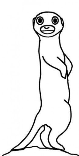 260x513 Meerkat Drawing Interested