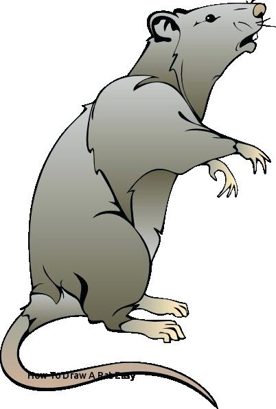 402x596 easy rat drawing how to draw a rat for kids step rat drawing