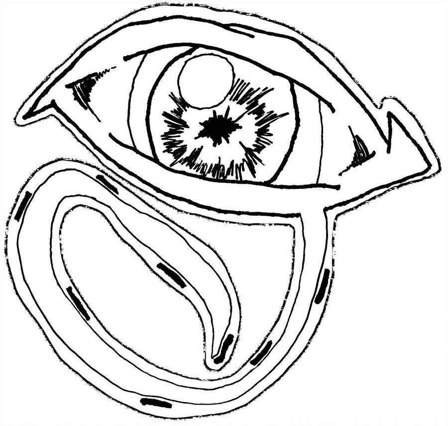 900x857 The All Seeing Eye