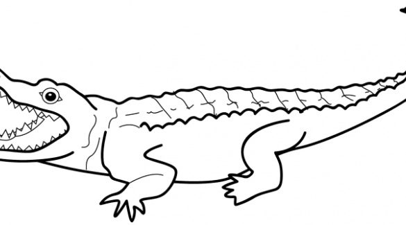 585x325 Astonishing Outline Of An Alligator Collection Drawing High