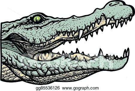 450x302 gator drawing don gator alligator drawing step