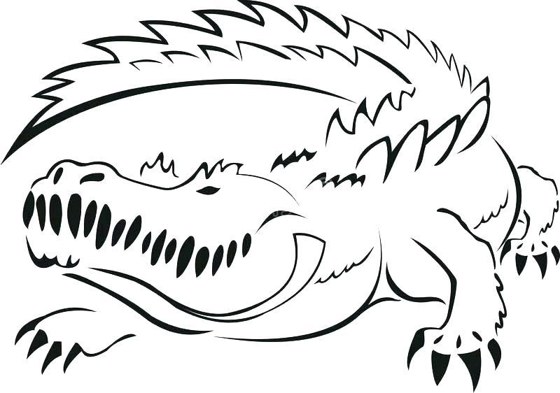 800x562 Alligator Drawing Outline