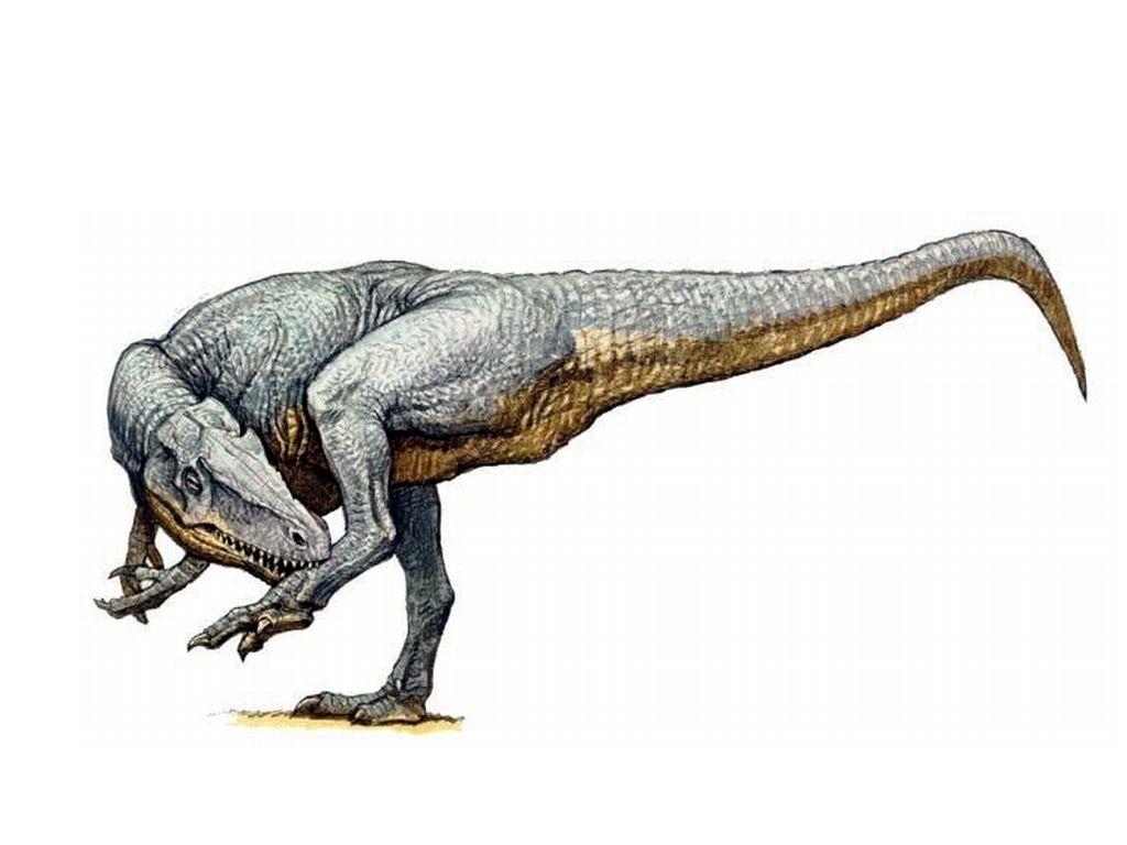 1024x768 allosaurus jurassik george park prehistoric animals, animals