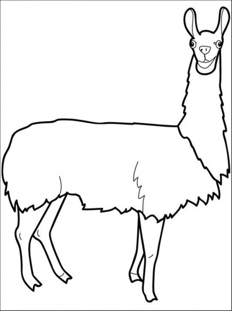 alpaca drawing  free download on clipartmag