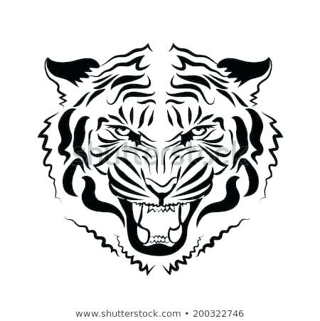 450x451 How To Draw A Tiger Face Color Vector Drawing Of The Head