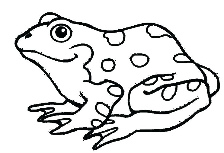742x507 amphibian coloring pages related post amphibian coloring pages