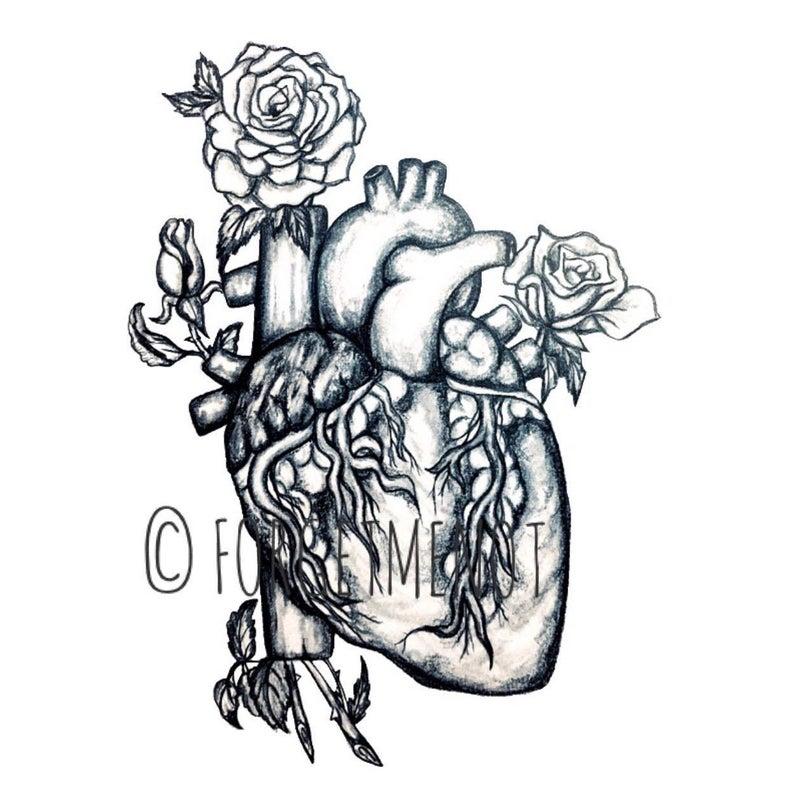 794x794 anatomical heart drawing print rose decor anatomical art etsy