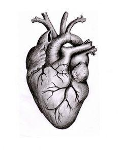 236x295 anatomical heart tattoo anatomical heart drawing, realistic