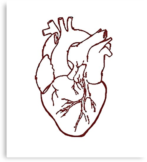 499x550 Anatomically Correct Heart Canvas Prints