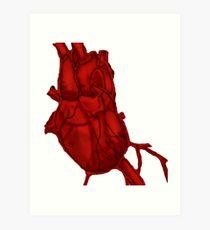 210x230 Anatomically Correct Heart Drawing Art Prints Redbubble