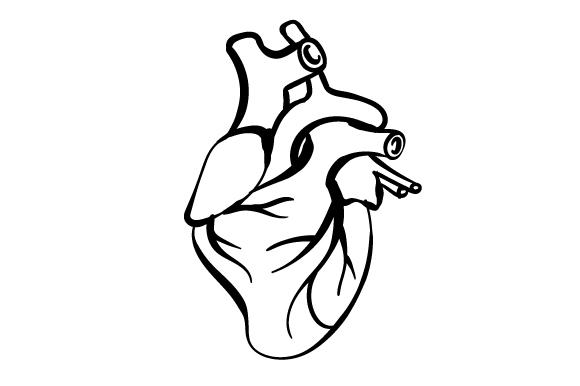 580x386 Anatomically Correct Heart