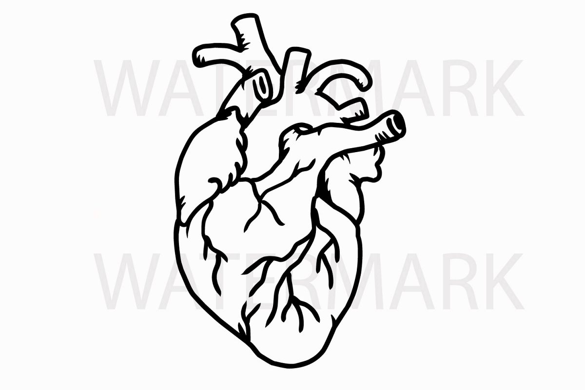 1200x800 Heart Drawing Organ For Free Download