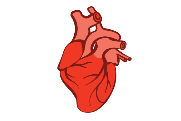 580x386 How To Draw An Anatomically Correct Heart