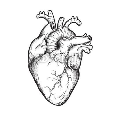 400x400 Human Heart Anatomically Correct Hand Drawn Line Art And Dotwork