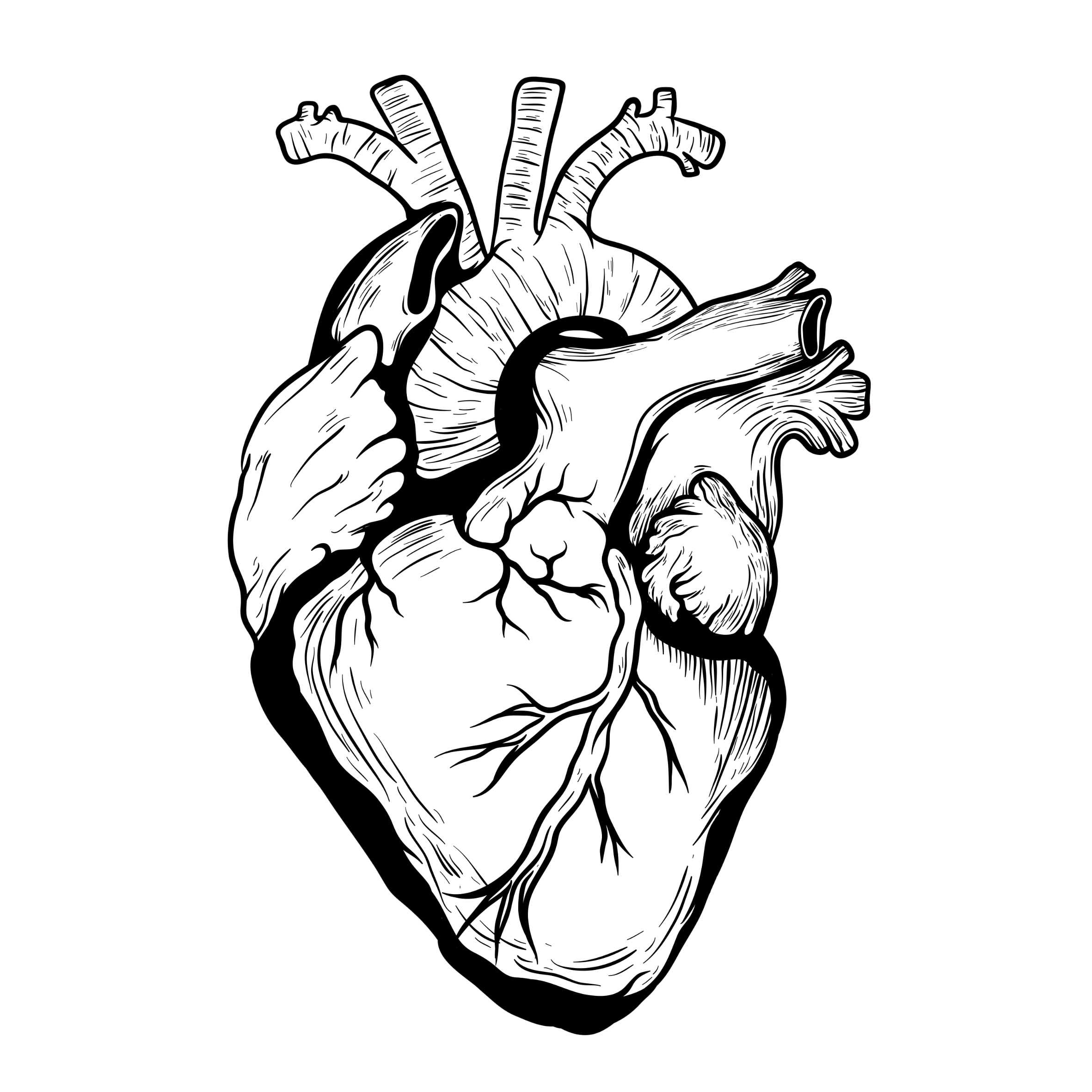 2362x2362 Organ Drawing Shape Heart For Free Download