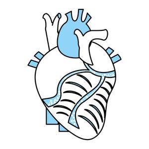 300x300 Anatomically Correct Heart Royalty Free Vectors