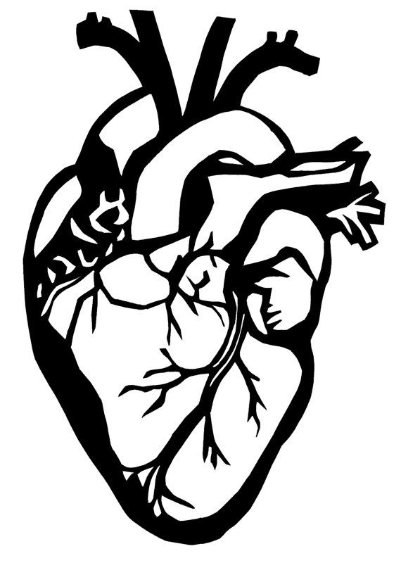 570x800 Anatomical Heart Silhouette