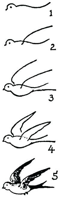 200x655 How To Draw Easy Birds Step