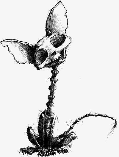 400x528 Animal Skeleton, Animal Clipart, Creative Skeleton, Weasel