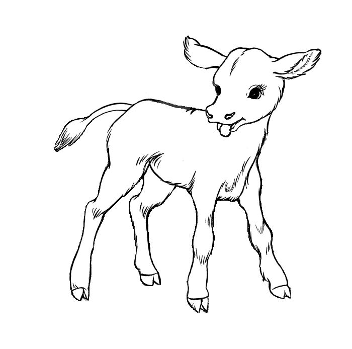 Animals Drawing For Colouring