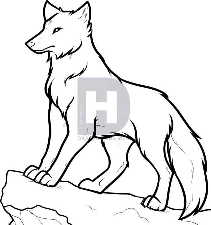 Wolf Animation Drawings Drawing Art Ideas