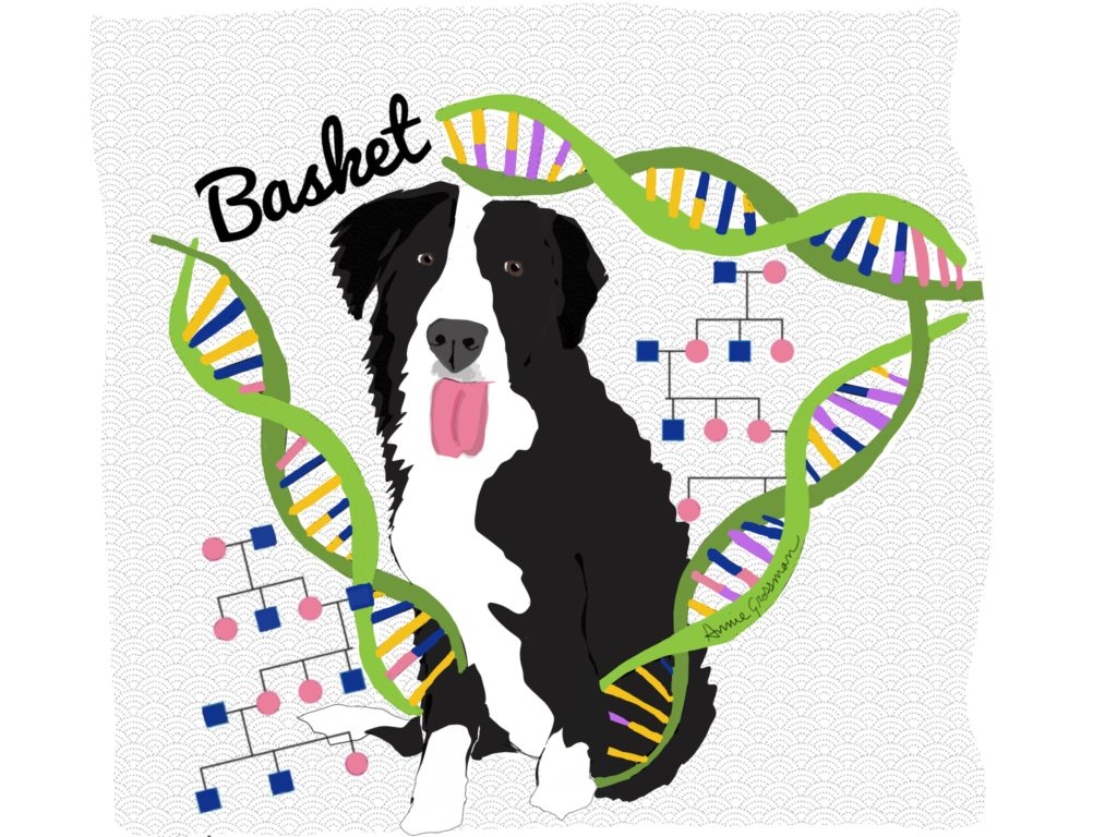 1024x768 Episode Our Student Basket Is Helping Geneticists Extend