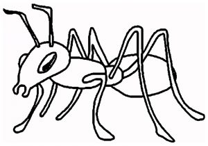 300x210 drawing of an ant how to draw an ant for kids ant drawing lesson