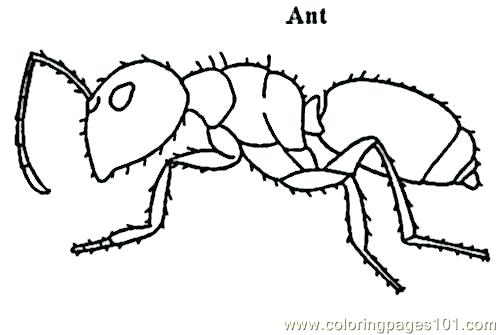 500x335 Drawings Of Ants How To Draw An Ant Drawing Of Ants