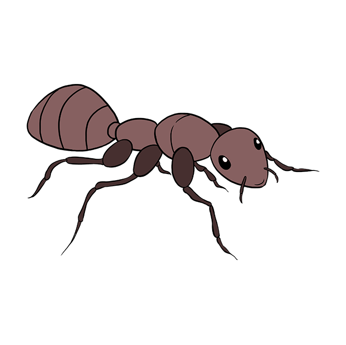 680x678 How To Draw An Ant