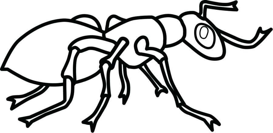 900x440 Ant Line Drawing