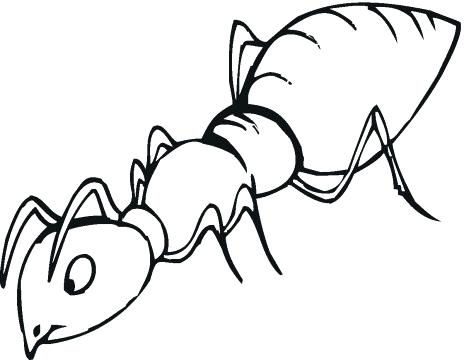464x360 ant line drawing how to draw an ant ant man line drawing