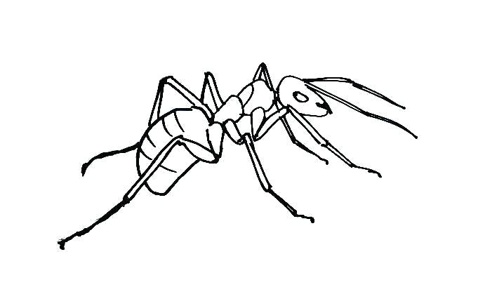 681x436 Drawing Ant How To Draw An Ant Step