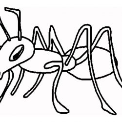 250x250 Drawing Ant With Letter A Basic Man And The Wasp Easy Scientific
