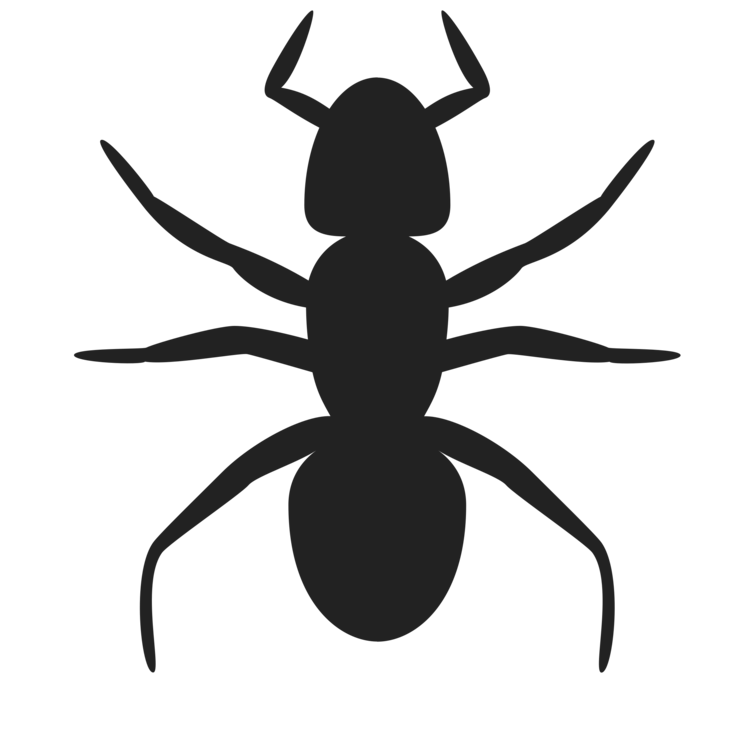 750x750 Ant Drawing