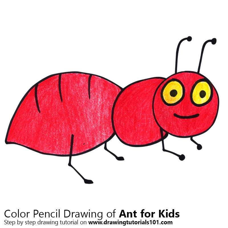 800x800 Learn How To Draw An Ant For Kids