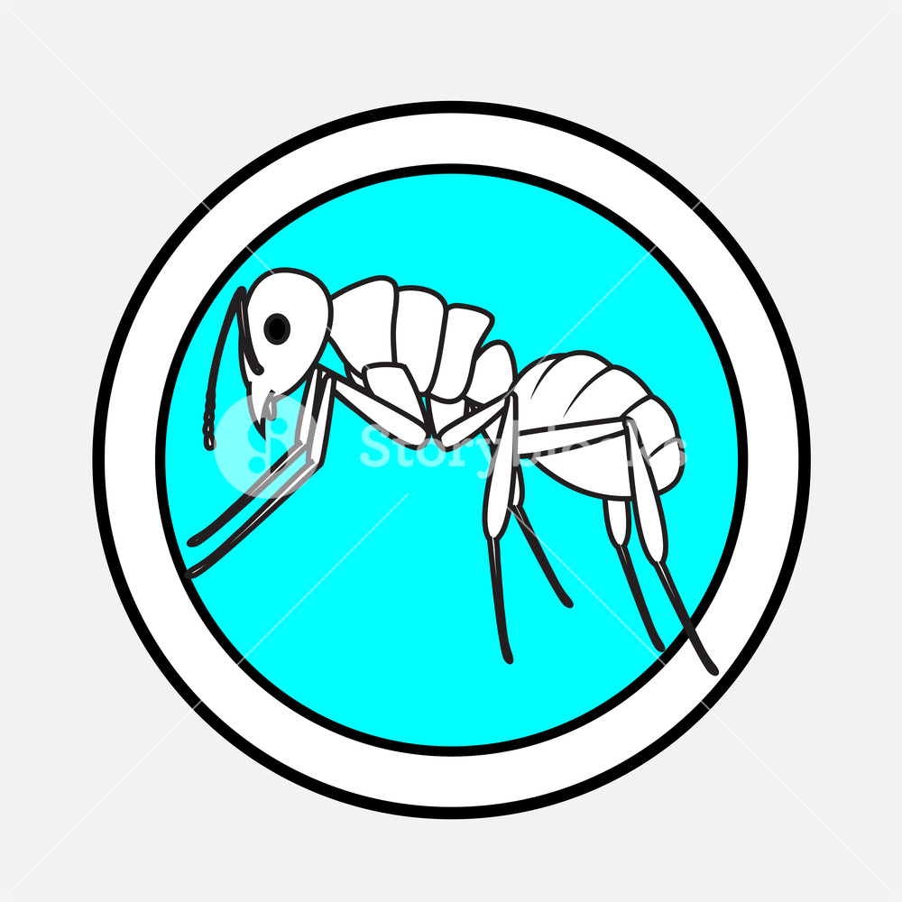 1000x1000 Ant Drawing Vector Illustration Royalty Free Stock Image