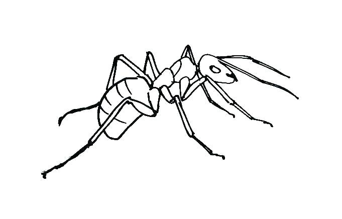 681x436 Ant Coloring