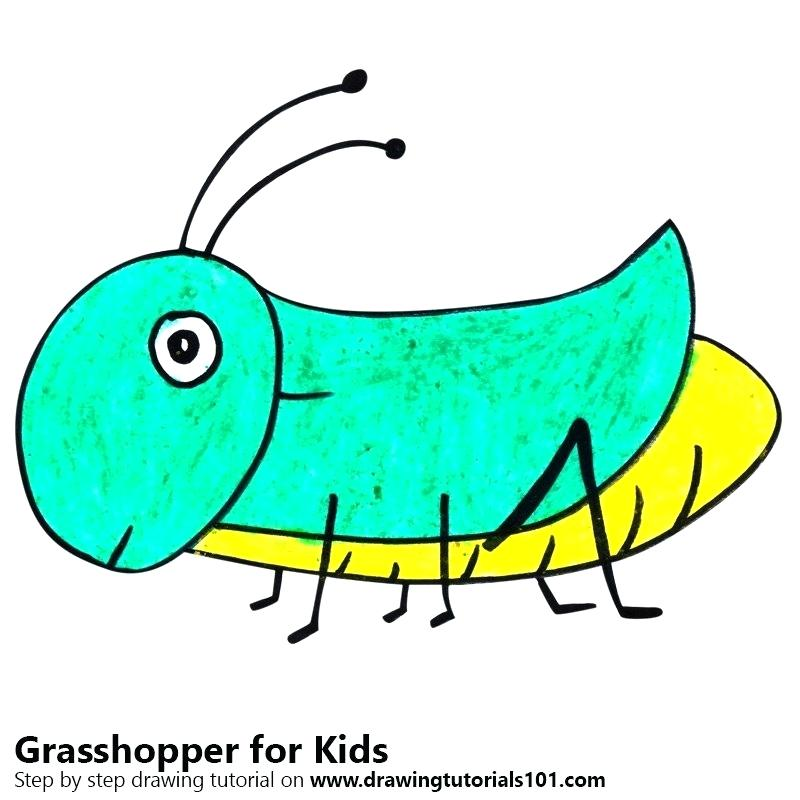 800x800 Grasshopper Drawings Collection Of Ant And High Quality