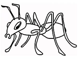 300x225 Ant For Kids